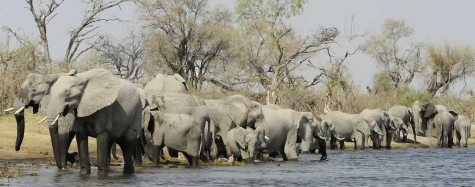 Elephants in Mudumu National Park in the Mudumu Landscape. Photo: NACSO/WWF in Namibia